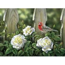 ДМ-330 Птица на садовых розах. Алмазная Мозаика. Наборы со стразами.