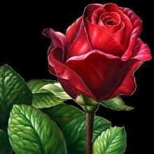ДМ-333 Алая роза. Алмазная Мозаика. Наборы со стразами.